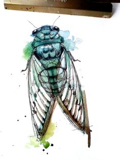 Watercolor Animals by Abby Diamond - Alternative or Unusual Art / Arte Alternativo o Inusual rings aesthetic decorations Watercolor Paintings Of Animals, Animal Paintings, Watercolor And Ink, Cicada Tattoo, Bug Art, Beautiful Bugs, Insect Art, A Level Art, Diamond Art