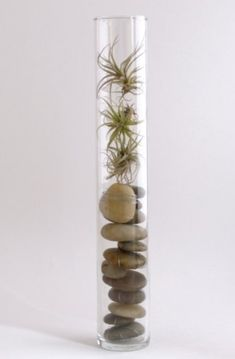 Stones and airplants in a narrow vase make a lovely sculptural statement