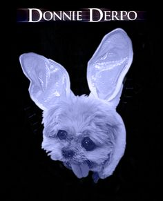 Donnie Derpo | 12 Sure-fire Oscar Winning Movies… If Only Dogs Ran Hollywood