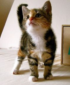 cute cats mega collection | Humor