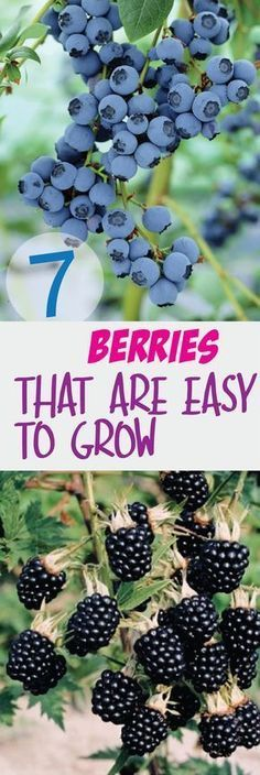 7 Berries That Are So Easy To Grow – Making DIY Fun #minigardens