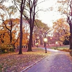 Central Park in the Fall #NYC