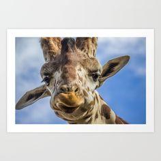 Derpy the Giraffe