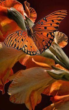 Orange butterfly perched on orange flowers. Papillon Butterfly, Butterfly Kisses, Butterfly Flowers, Beautiful Butterflies, Beautiful Birds, Animals Beautiful, Orange Butterfly, Flying Flowers, Monarch Butterfly
