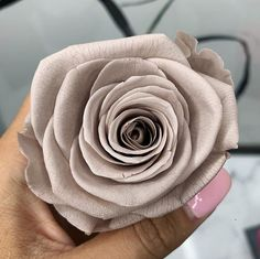 Perfect Valentine's Gift Ideas for Him Rose colour meanings Rose Color Meanings, Single Red Rose, Luxury Flowers, Love Symbols, Valentine Gifts, Red Roses, We Heart It, Gift Ideas, Cream