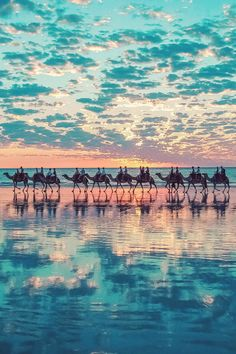 Say whaaat??  Camels in Broome, Australia by Shahar Keren