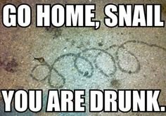 Go home, snail, you are drunk!