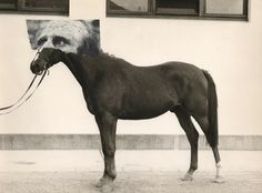 horse - philippe jusforgues