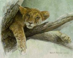 Robert Bateman Up A Tree Lion Cub
