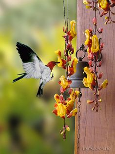 Birds & flowers | © All rights reserved. Nome Científico: Th… | Flickr