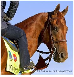 Dortmund at Churchill Downs this morning photo by Barbara Livingston Preakness Stakes, Derby Horse, American Pharoah, Sport Of Kings, Thoroughbred Horse, Racehorse, Horse Love, Courses, Horse Racing