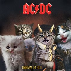 "AC/DC - ""Highway To Hell,"" re-imaged with kitties! Ac Dc, Famous Album Covers, Classic Album Covers, Crazy Cat Lady, Crazy Cats, I Love Cats, Cool Cats, Hard Rock, Highway To Hell"