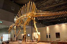 #Spinosaurus #Egypt #dinosaur