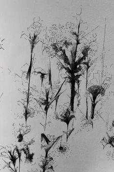 The Sketchbook | Samantha Kaplan. #floraldrawing #abstractnature #finelineart