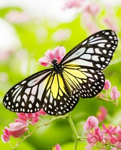 """""""Just living is not enough,"""" said the butterfly. """"One must have sunshine, freedom and a little flower."""" Hans Christian Andersen"""