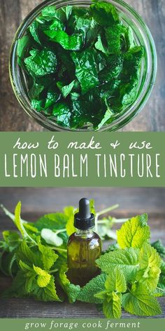 Natural Garden Design Lemon balm has many health benefits and one of the best ways to use it is in a tincture. Learn how to make this simple lemon balm tincture using fresh lemon balm from your garden! Healing Herbs, Medicinal Plants, Natural Healing, Holistic Healing, Natural Oil, Natural Beauty, Natural Home Remedies, Herbal Remedies, Health Remedies