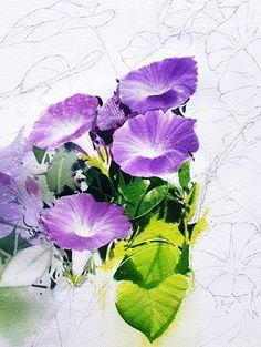 최순자's media content and analytics Watercolour Tutorials, Watercolor Artists, Watercolor Cards, Watercolour Painting, Watercolor Flowers, Art Floral, Morning Glory Flowers, Blue Drawings, Botanical Art