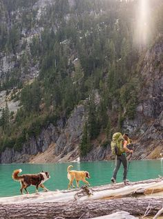 Visit @campingwithdogs on Instagram for your daily dose of furry friends adventuring.