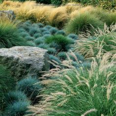 Landscaping with grasses.