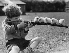 Boy playing with chicks and guns.