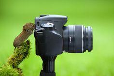 15 photos amusantes d'animaux qui se prennent pour de vrais photographes