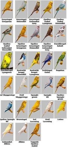 Shared >> Parakeets Singing Music ;)