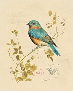 sweet bird!