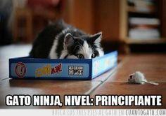 41690 - Gato ninja, nivel: principiante