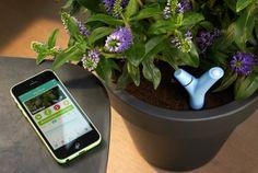 Le Parrot Flower Power vous aide à bichonner vos plantes