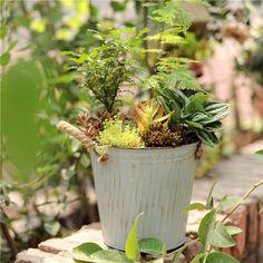 sweet house plant holders. Small Geometric Pyramid Glass Terrarium Box Flowerpots Planter  DIY succulents flower pots Pinterest Garden planters Planters and Gardens