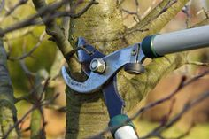 what and when to prune
