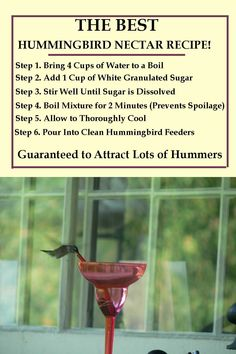 #hummingbirdfood #instructions #hummingbirds #hummingbird #nectarfood #guaranteed #includes #homemade #cleaning #filling #attract #recipe #best #our #theBest Hummingbird Food Recipe Homemade Hummingbird Nectar/Food Recipe. Guaranteed to Attract Hummingbirds. Our Recipe Includes the Best Cleaning Instructions and Filling Instructions!Homemade Hummingbird Nectar/Food Recipe. Guaranteed to Attract Hummingbirds. Our Recipe Includes the Best Cleaning Instructions and Filling Instructions!