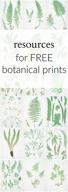 Resources for FREE Botanical Prints - download this e-guide with links to over 150 FREE botanical printables to use in gallery walls or crafts.