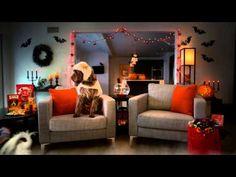 ▶ Pets Target Haul - Halloween Edition - YouTube
