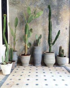 """820 """"Μου αρέσει!"""", 22 σχόλια - Yöli & Otis (@yoli_and_otis) στο Instagram: """"Tiles #design #Pinterest #plantlife"""""""