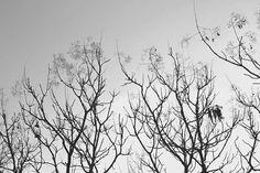 Veins of woods...