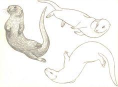 Google Image Result for http://3.bp.blogspot.com/-rhX-TK9_X9I/ToWv3rHyepI/AAAAAAAABKg/Nu2iuuPFetM/s1600/otters%2Bswimming.jpg
