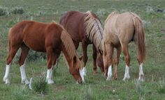 wild mustangs oregon | wild horses Oregon, bachelor band | Flickr - Photo Sharing!