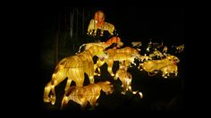Check out Illuminasia at the Calgary Zoo Watch News, Arts And Entertainment, Calgary, The Help, Lanterns, Lion Sculpture, Scene, Entertaining, Statue