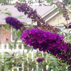 Purple, by Sharon Pettigrew