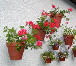 Hang-A-Pot (also known as the TerraLatch) is an ingenious device that allows you to hang your flower pots on any surface