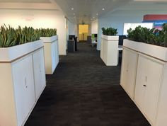 Office Plants help prevent COVID-19 with green walkways & green screens in between office desks. #officelandscapes #cabinettopplants #officeplants Indoor Office Plants, Office Desks, Walkways, Screens, Offices, Kitchen Island, Home Decor, Catwalks, Canvases