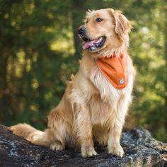 Kurgo Dog Products - Reflect and Protect Active Dog Bandana, $14.00 (http://www.kurgo.com/dog-jackets/reflect-and-protect-active-dog-bandana/)