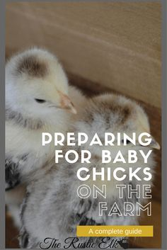Are you ready to add baby chicks to your farm, backyard, or homestead? Believe it or not, there is more preparation involved than just ensuring they have food and water! Here is a complete guide on how to add chickens to your homestead, the right way!