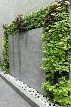 6 Good-Looking Hacks: Black Fence Backyard green fence clematis.Front Yard Fence Dream Homes decorative fence. Front Yard Garden Design, Fence Garden, Fence Design, Terrace Garden, Vertical Garden Wall, Vertical Gardens, Walled Garden, Water Walls, Interior Garden