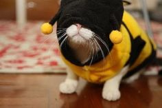 Proof Cats Are Cool Even in Costumes Crazy Costumes, Dog Halloween Costumes, Pet Costumes, Halloween Cat, Bee Dog, Cat Dresses, Pet Fashion, Cool Cats, Cute Pictures