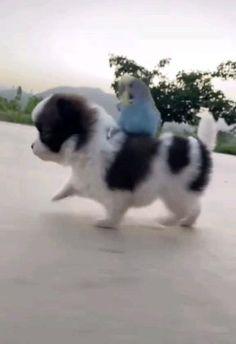 Cute Animal Photos, Cute Animal Videos, Funny Animal Pictures, Cute Funny Dogs, Cute Funny Animals, Cute Cats, Super Cute Animals, Cute Little Animals, Baby Dogs