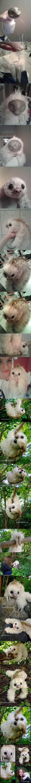 Fantasy Sloth