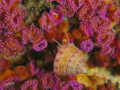 Snail and Sea Anemones