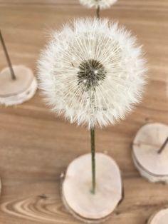 Make dandelion durable as a gift (with line and color .-Pusteblume haltbar machen zum Verschenken (mit Strich und Faden) Make dandelion durable as a gift with line and thread Fleurs Diy, Ideas Hogar, Deco Floral, Plant Pictures, Plant Images, Diy Décoration, Garden Gifts, Diy Garden, Diy Flowers